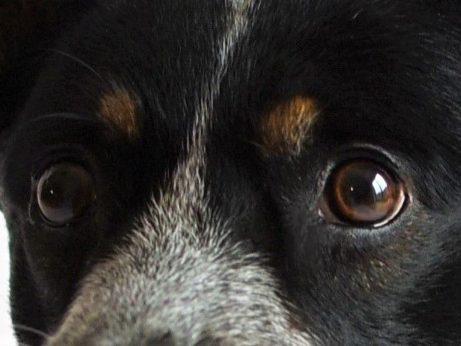 Diagnóza z očí psa