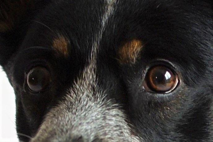 Diagnóza zočí psa