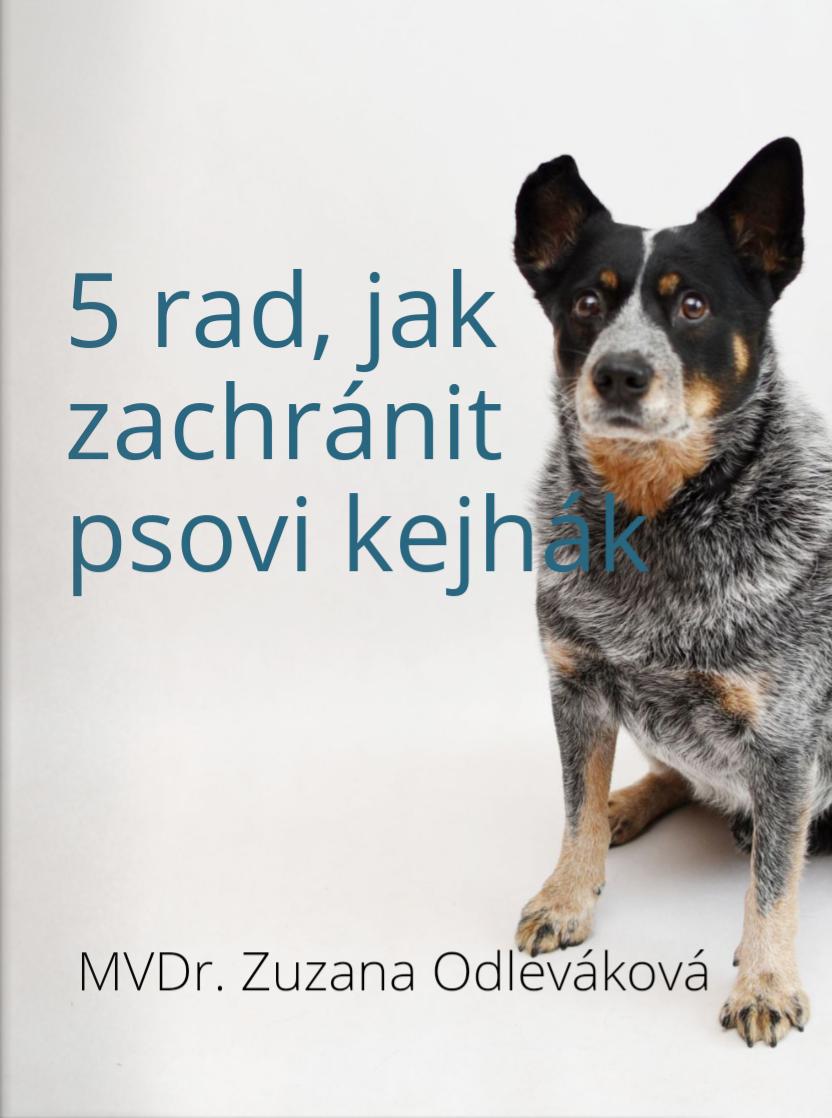 5 rad, jak zachránit psovi kejhák