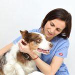 Klinicke vysetreni psa aneb preventivní prohlídka